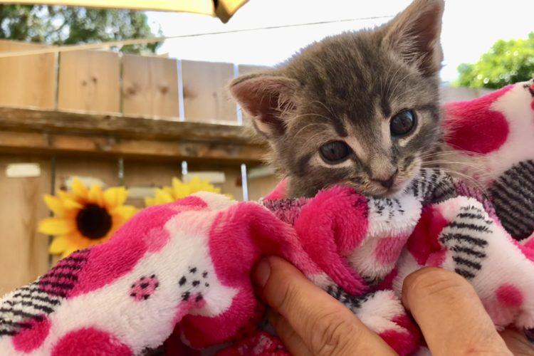 Donations Kitten Spay Neuter Kingston Initiative